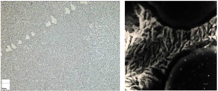 Structure fibreuse - micrographie et MEB.